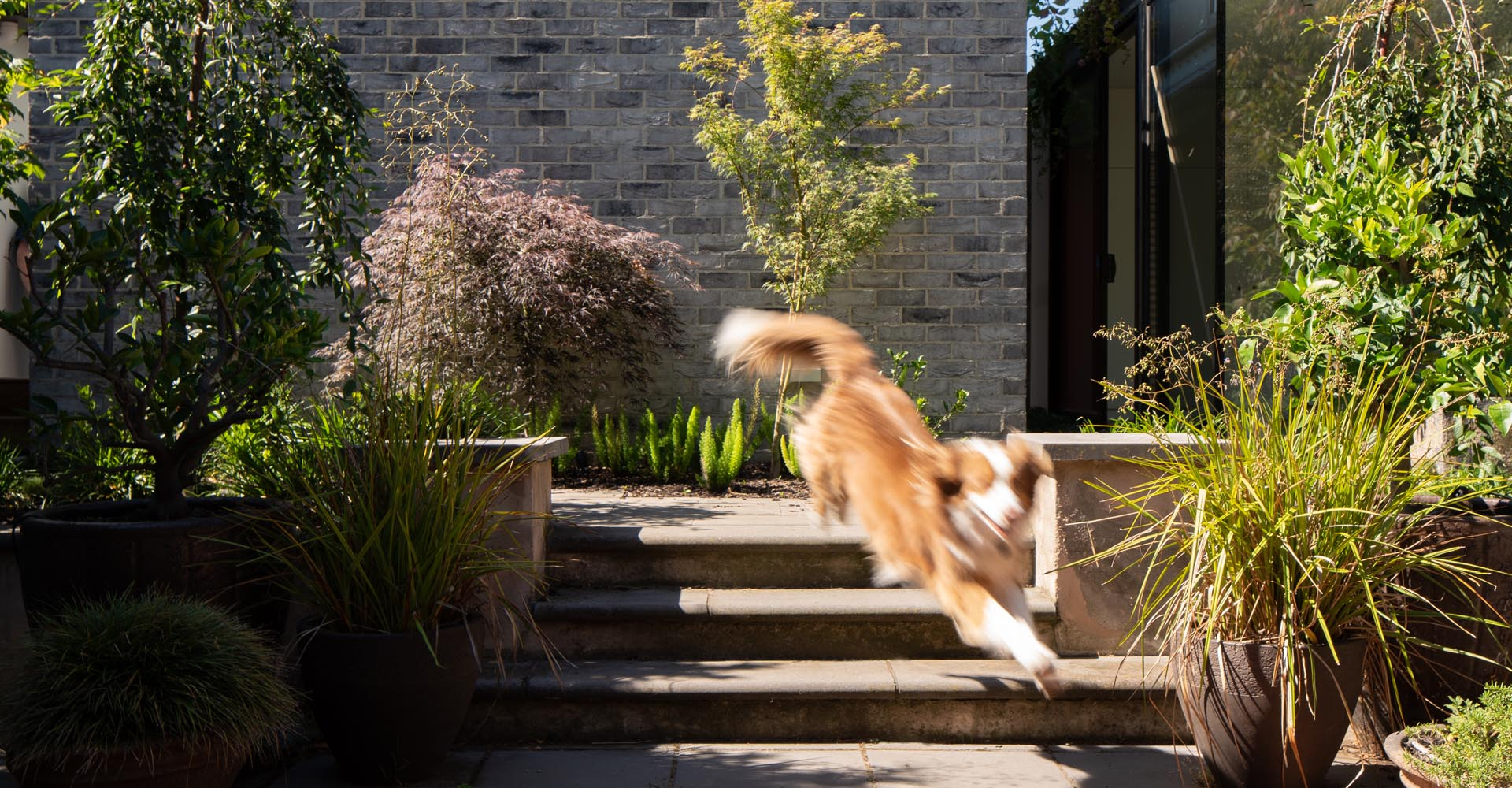 Ros McCully Garden Design Warrandyte, Melbourne
